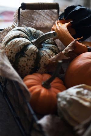 Basket with different kinds of pumpkins. Fresh harvest of pumpkins.