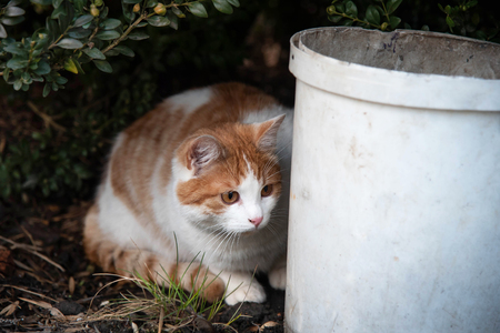 A cat is hiding behind a bucket and hunting for a mouse.