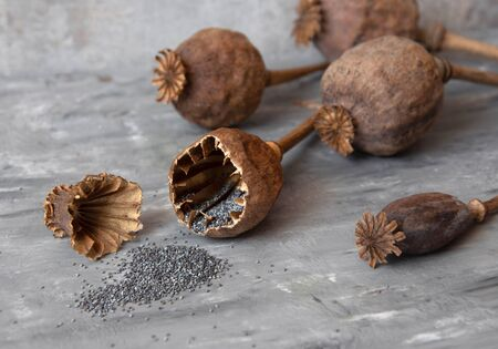 Homemade grown poppy heads, opened head and spilled poppy seeds.