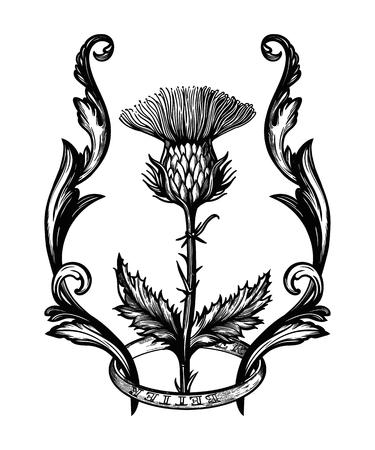 Distelblume im Ornamentrahmen. Das Symbol von Schottland, isolierte Vektorillustration.