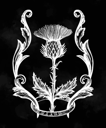 Thistle flower in ornament frame.The Symbol Of Scotland, isolated vector illustration. Illustration