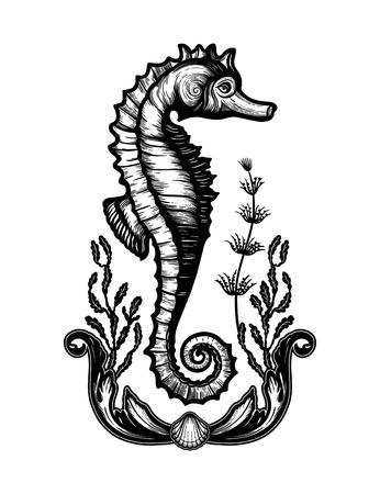 Hand drawn seahorse with sea plants in elegant frame.Vintage vector illustration. 写真素材 - 124604912