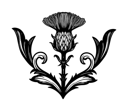 Thistle flower -the Symbol Of Scotland. 矢量图像