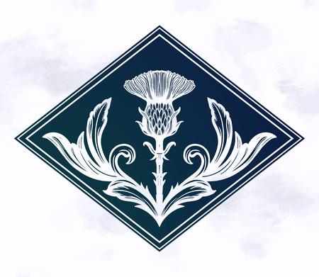 Thistle flower -the Symbol Of Scotland. Иллюстрация