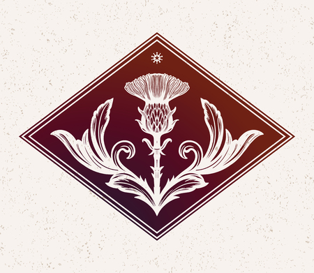 Thistle flower -the Symbol Of Scotland. Illustration