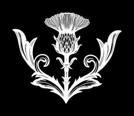 Distelblume - das Symbol von Schottland.