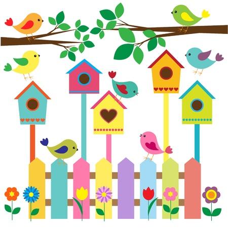 Collection d'oiseaux colorés et nichoirs