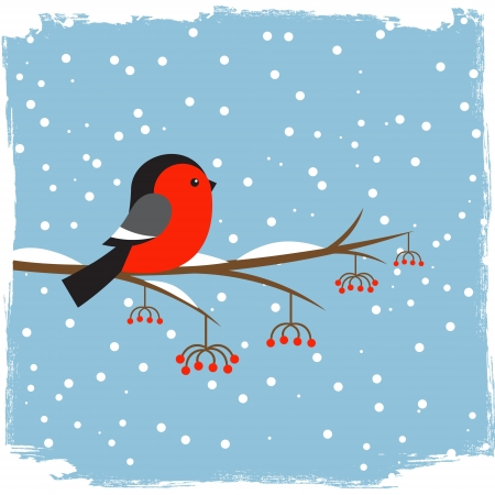 robin bird: Cute  bullfinch on branch rowan Illustration