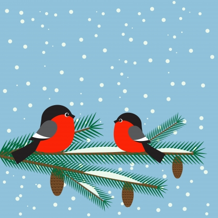 Cute bullfinches on branch spruce Vector