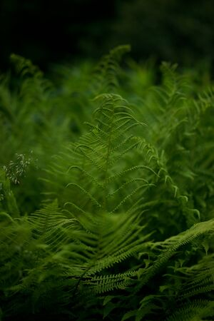 green grass. fern. time to the country house