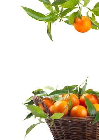 Tangerines in a basket  and mandarin falling on a white background Stock Photo - 10936488