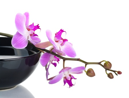 aroma bowl: Orchid in a black bowl on a white background Stock Photo