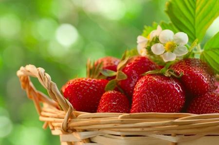 fruitmand: Aardbeien in een mand in de tuin Stockfoto
