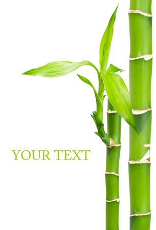 bamboo leaves: Bamboo with leaves on white background
