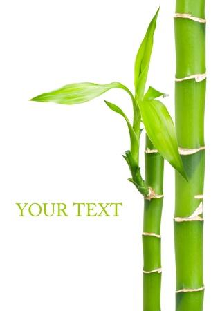 bamb�: De bamb� con hojas sobre fondo blanco Foto de archivo