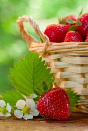 Strawberries in basket on garden table photo