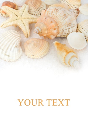 caracolas de mar: Conchas marinas en la sal del mar