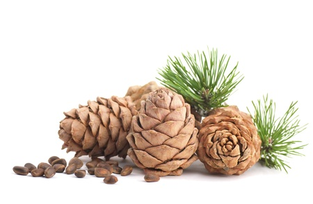 pinoli: Coni di cedro con ramo su uno sfondo bianco