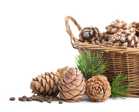 Cedar cones and basket on a white background