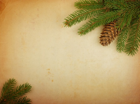 Spruce branch with cones on old paper photo