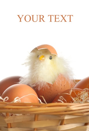 hatched: Hatched chicken in a basket with eggs Stock Photo