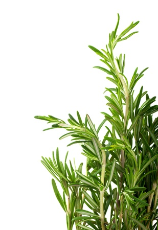 rosemary: Branches of rosemary on a white background