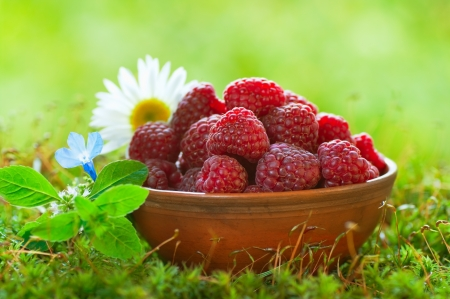 red clay: Ripe raspberries in a clay bowl Stock Photo