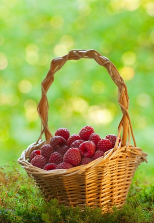 collects: Ripe raspberries in the basket Stock Photo