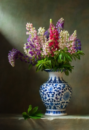 lupine: Still life with flowers lupine in a chinese vase