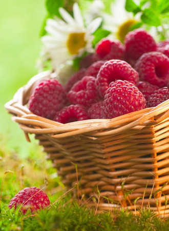 Ripe raspberries in the basket photo