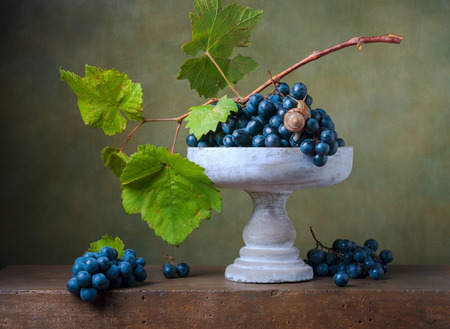 Still life with grapes in a vase and snail