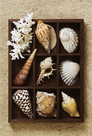 shadow box: Shadow box with collection of sea shells Stock Photo