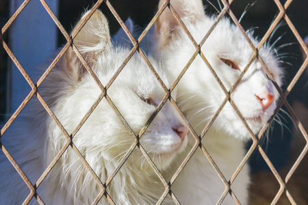 cats trap and is stuck in a steel wire netting,cage,hoping for freedom with sad feeling