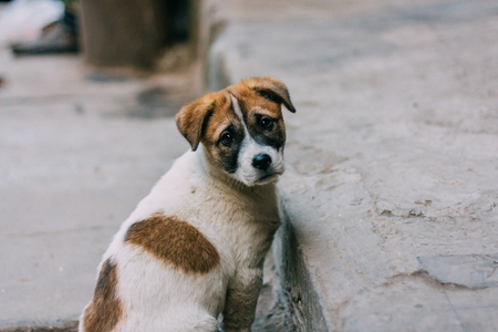 Sad white and brown stray dog standing on a road looking back Imagens