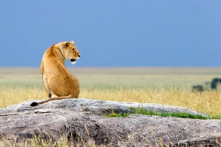 Alone Simba