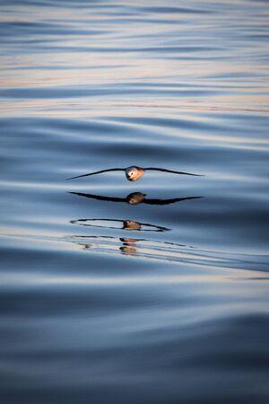 sea gull on the atlantic water
