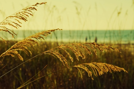 Golden sea outs at Myrtle Beach, South Carolina photo