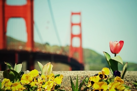 Blooming flowers with a view of Golden Gate bridge in the background photo