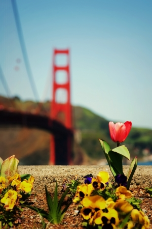 Spring flowers blooming in march in San Francisco photo
