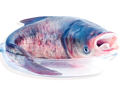 invasive species: Bighead carp isolated on white  Bighead carp is a freshwater fish, one of several Asian carps