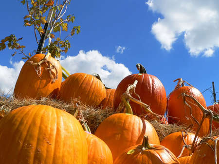 Pumpkins and Sky Stock Photo