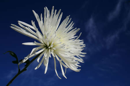Flower with Blue Sky photo