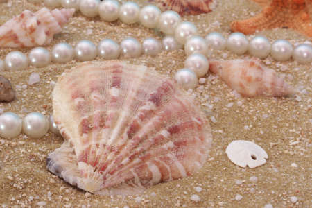 Sea Shells With Pearl Necklace on Blue Background