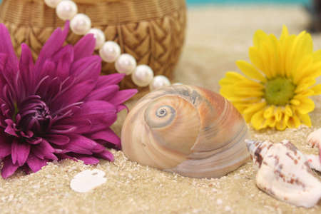 Flowers and Sea Shells on Beach, Close-up, Shallow DOF