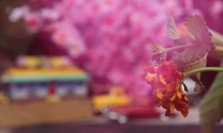 Flowers Closeup with Vintage Diner and Hot Rods in background. Small Town Concept