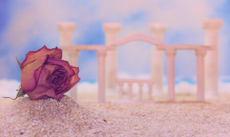 Dried Flower on Tropical Beach With Roman Style Ruins