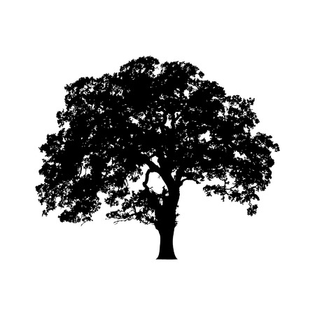 oak leaves: Beautiful vector tree silhouette icon for websites Illustration