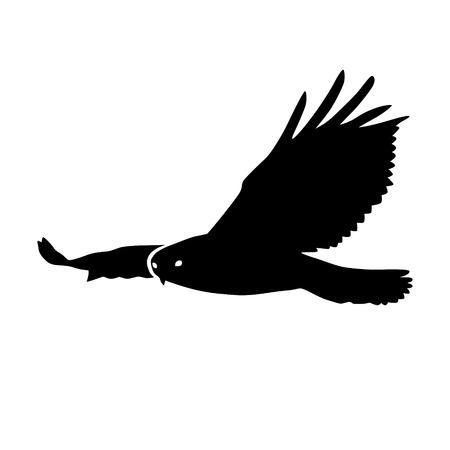 aguila real: Hawk o icono plana silueta de águila para las aplicaciones de la naturaleza y sitios web