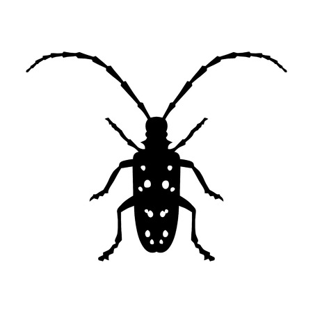 long legged: Asian Longhorned Beetle insect flat icon for nature apps and websites