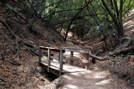 wooded path: A small wooden bridge connecting the road in a dense forest